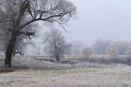 Landscape beginning of winter in the oak grove covered with frost at sunset photo