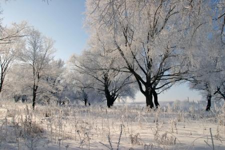 winterlandschap heldere ijzige ochtend in het bos bedekt met vorst