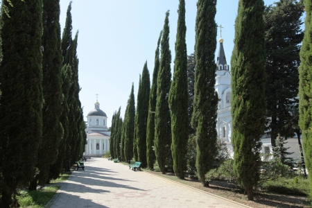 avenue of cypress trees on a clear summer day
