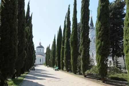 laan van cipressen op een heldere zomerdag