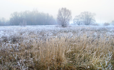 autumn landscape of dry grass in the meadow near the woods covered with frost cold foggy morning photo