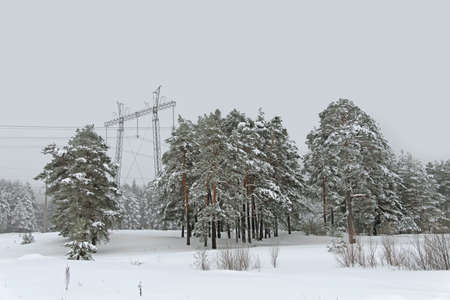 winter landscape of snowfall in the pine forest and power lines on a cloudy day photo