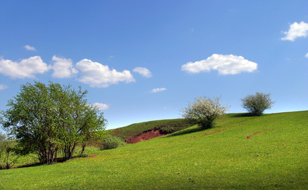 idealistic: summer landscape idealistic picture of white clouds on a blue sky and rare trees on the green meadow Stock Photo