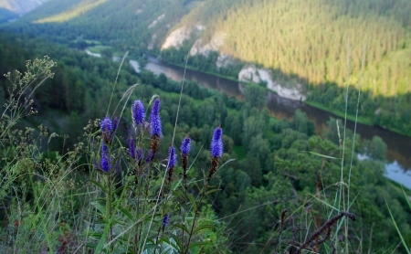 urals: close-up of mountain flowers in the southern Urals