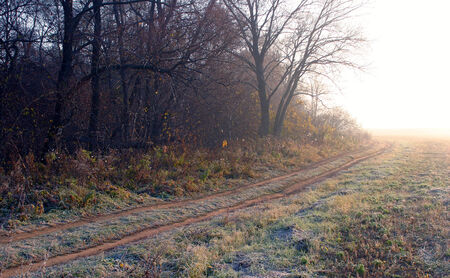 autumn landscape of dry grass in the meadow near the woods covered with frost cold foggy morning