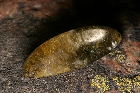 carnelian: macro various single polished semi-precious stones studio Stock Photo