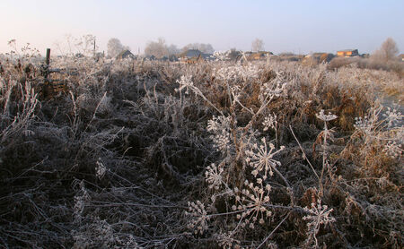 isolated frost on a dry grass photo