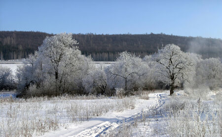 tatarstan: winter landscape bright frosty morning in the woods covered with frost