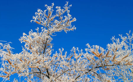 Winter landscape fluffy thick frost on the trees and bushes dry grass photo