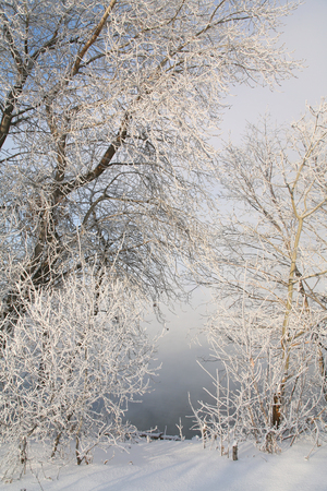winter landscape trees and shrubs in frost in the ice of the river and water vapor over photo