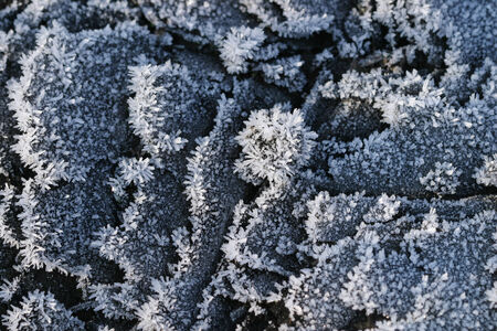 frosty morning: macro beautiful hoarfrost on green grass and fallen leaves sunny frosty morning