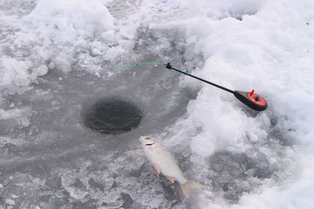 close-up of freshly caught fish on a frozen river in winter photo