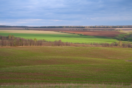 arable land: beautiful spring landscape of green fields and arable land and cloudy sky after the rain