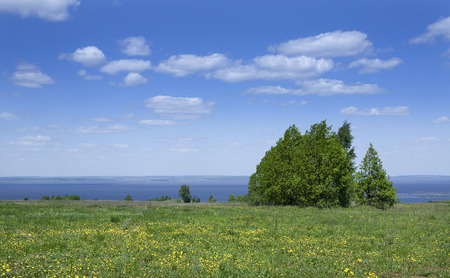 spring landscape of endless meadows blooming trees and blue sky with white clouds photo