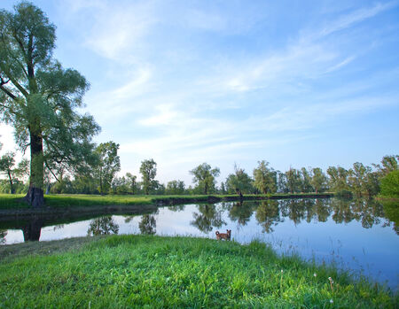 perfectly: summer landscape perfectly smooth calm river and trees on the shore on a sunny day
