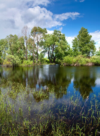 beautiful summer landscape oak grove on the shore of a calm river in a sunny day photo