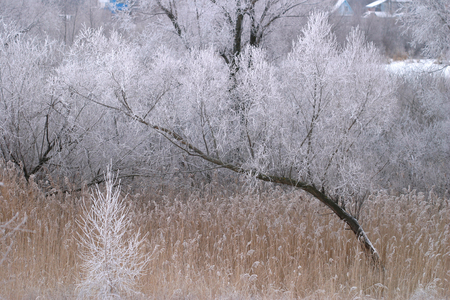 winter landscape amazing beautiful frost on the trees and dry grass on a cloudy day photo