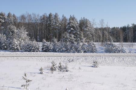 tatarstan: winter landscape of snowy road near a pine forest on a sunny frosty day