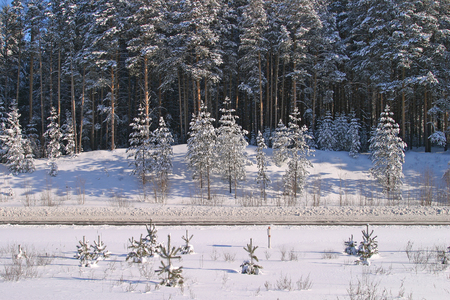 winter landscape of snowy road near a pine forest on a sunny frosty day photo