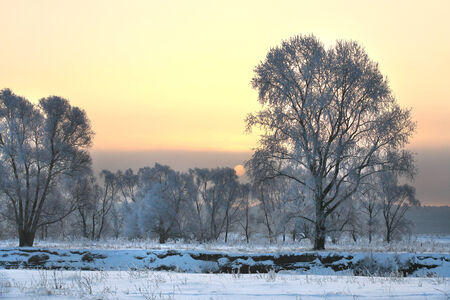 winter landscape beautiful sunset over the oak grove in hoarfrost photo