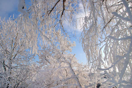 tatarstan: close-up frost on the branches of trees grass and bushes frosty winter day