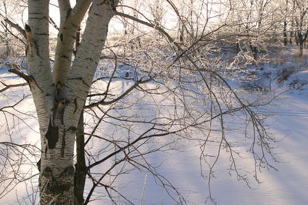 tatarstan: Winter landscape of a frozen river and trees on the shore covered with frost on a sunny day