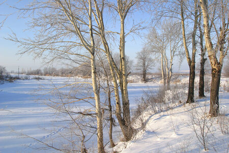 Winter landscape of a frozen river and trees on the shore covered with frost on a sunny day photo