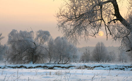 winter landscape beautiful sunset over the oak grove in hoarfrost photo