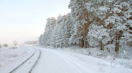 tatarstan: winter landscape of snowy road near the woods covered with snow and hoarfrost on a cloudy day