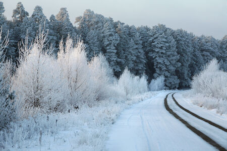 winter landscape of snowy road near the woods covered with snow and hoarfrost on a cloudy day photo