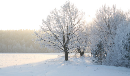 tatarstan: Winter landscape trees and dry grass in the forest covered with frost near the field the beautiful light of the setting sun Stock Photo