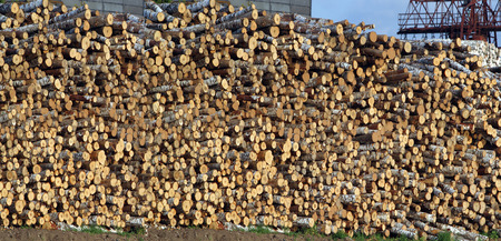 primary product: freshly sawn wood stacked in a sawmill for transportation sunny summer day