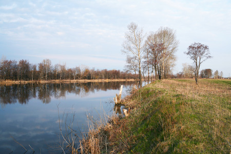 early spring landscape on small river reflection of bare trees in the water cloudy morning photo