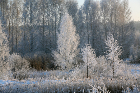 Winter landscape trees and dry grass in the forest covered with frost near the field the beautiful light of the setting sun photo
