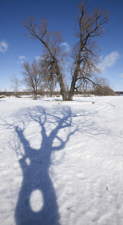 thawed: scenic winter landscape strange shadows from the trees in the snow on a bright sunny day
