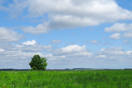 summer landscape of endless fields and forests on a clear sunny day Stock Photo - 27013222