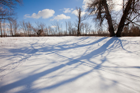 scenic winter landscape strange shadows from the trees in the snow on a bright sunny day photo