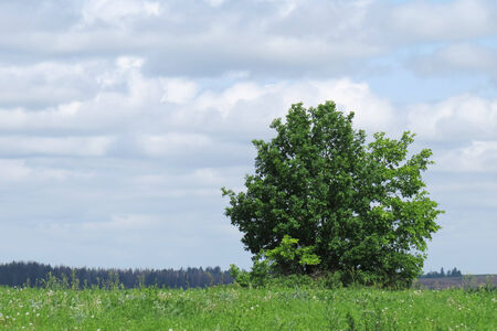 summer landscape of endless fields and forests on a clear sunny day Stock Photo - 27012656