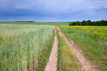 spring landscape dirt road of endless fields and beautiful clouds in the blue sky Stock Photo - 27012543