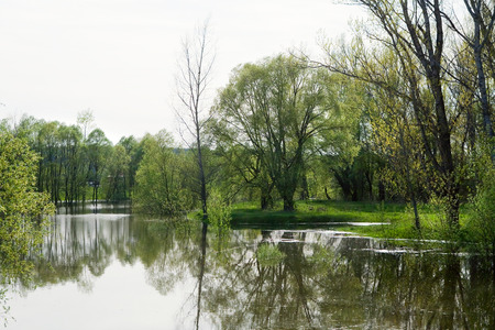 spring landscape in the flood tide in an oak grove on a sunny day photo