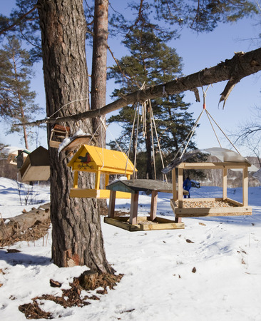 winter landscape trough for animals and birds in a pine forest bright sunny day photo