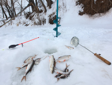 close-up freshly caught fish and a fishing rod near the hole on the frozen snow-covered river cloudy day photo
