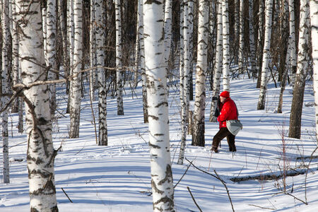 photographer in a bright red jacket takes winter landscape in a birch forest on a sunny day