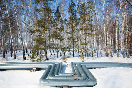 thawed: winter landscape of the curved pipeline in the snow near a forest