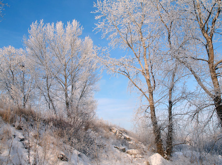 fabulous winter landscape fluffy frost on the trees and grass on the river bank in a light haze photo