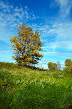 Scenic autumn landscape one yellow tree on a meadow against the blue sky photo