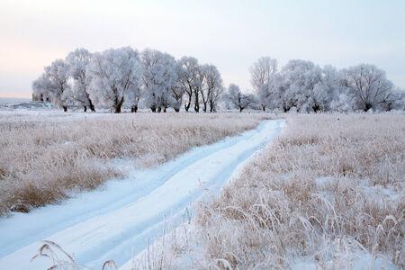 winterlandschap met sneeuw bedekte onverharde weg in de buurt van het eikenbos op een bewolkte dag
