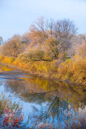 Scenic autumn landscape  oak grove with yellowed leaves near the river, frost on the grass on a cold morning photo