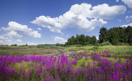 美しい夏風景素晴らしい紫野生の花と明るい晴れた日に白い雲と青空 写真素材