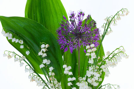 onion valley: macro Lily of the valley and decorative onions studio on white background